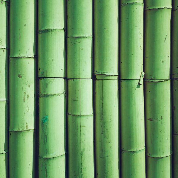 bamboo photo backdrop