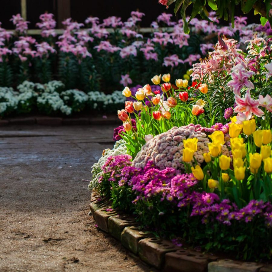 spring photo backdrop