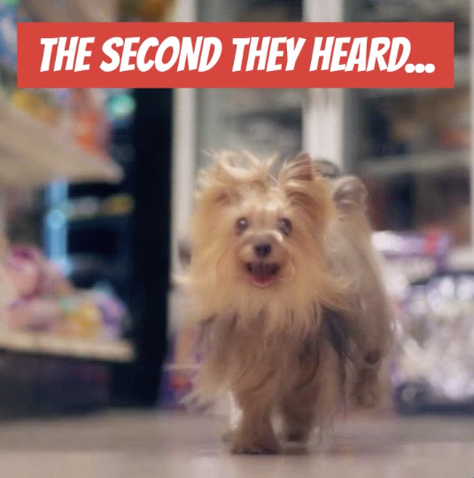 National Dog Biscuit Day Sale Video